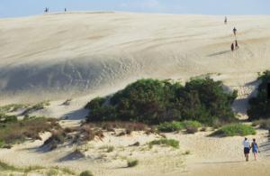 Sand Dune at Jockeys Ridge